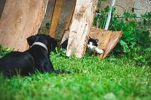 A dog and a cat in a garden together
