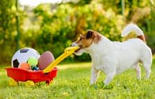 Dog pulling a trailer with toys